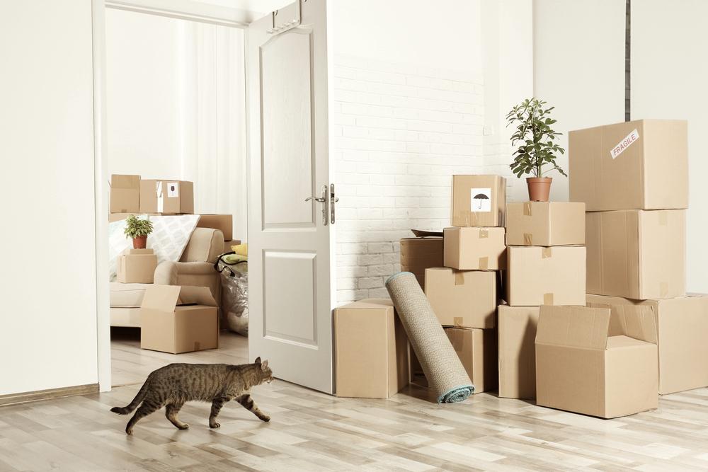 引っ越しによる猫のストレスを軽減する方法。新しい環境に慣れるためのコツとは?