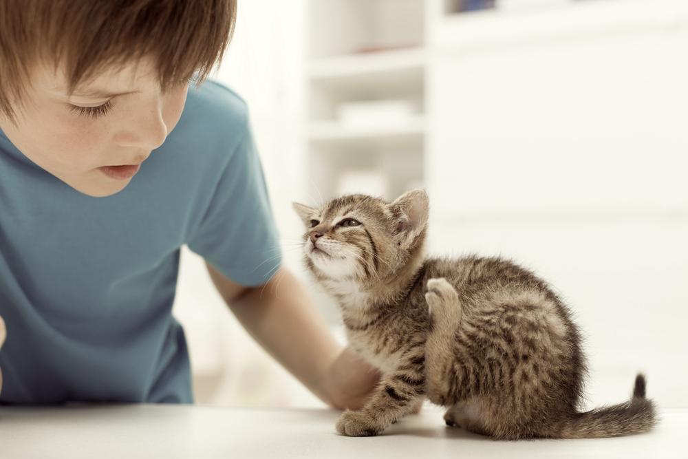 猫からフケが出るのはどうして?フケが出る原因と予防法まとめ