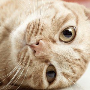 猫がまばたきするときの心理と理由は?実はたくさんの言葉が詰まってた