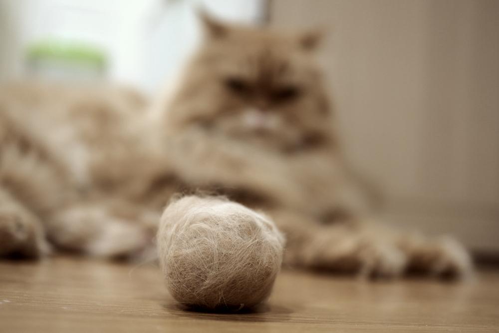 猫の抜け毛!お掃除のコツや対策グッズを大公開!