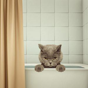 猫にお風呂はいつ必要なの?嫌がる猫を安全にシャンプーするコツ