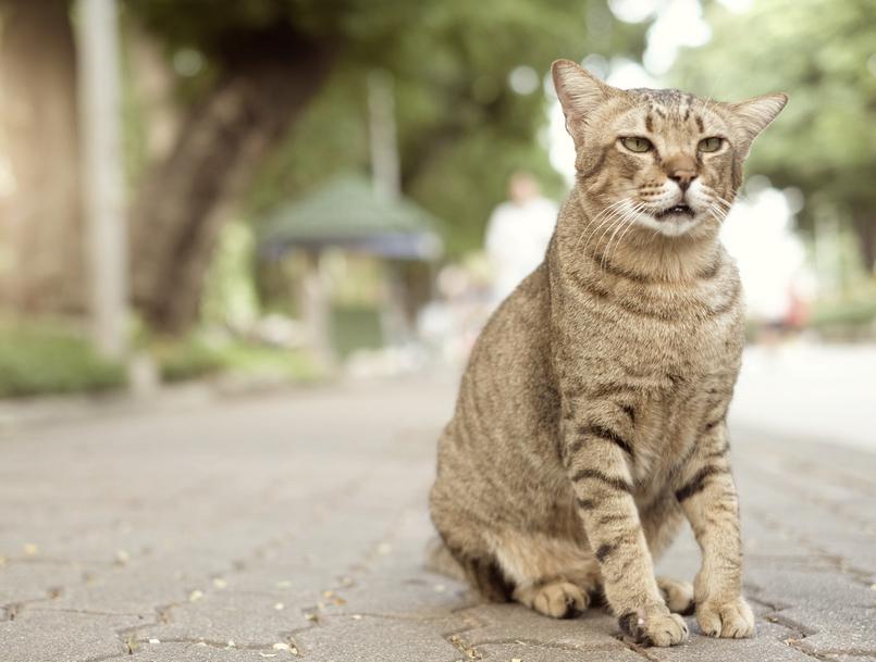猫の迷子対策に必ずやっておきたい5つのこと