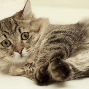 猫を飼いたくて里親譲渡会を調べてみた!