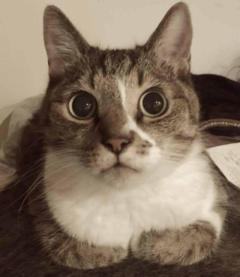シャンプー嫌いの猫ちゃんでも大丈夫!蒸しタオル浴とドライシャンプーのやり方とは画像1