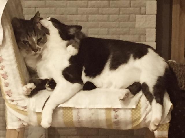 ペット防災|猫の防災対策Vol.1【備え編】万が一に備えてしておくこと画像2