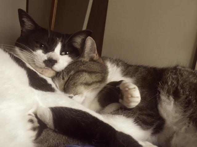 ペット防災|猫の防災対策Vol.1【備え編】万が一に備えてしておくこと画像3