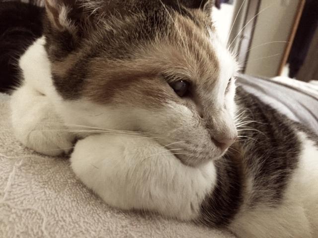 ペット防災|猫の防災対策Vol.2【避難編】もし大地震が起きたときは画像1