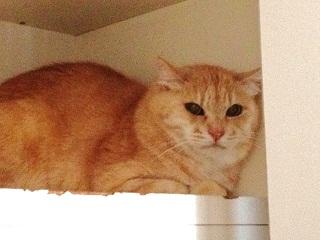 ペット防災|猫の防災対策Vol.3【支援編】被災地の猫ちゃんに私たちができること2