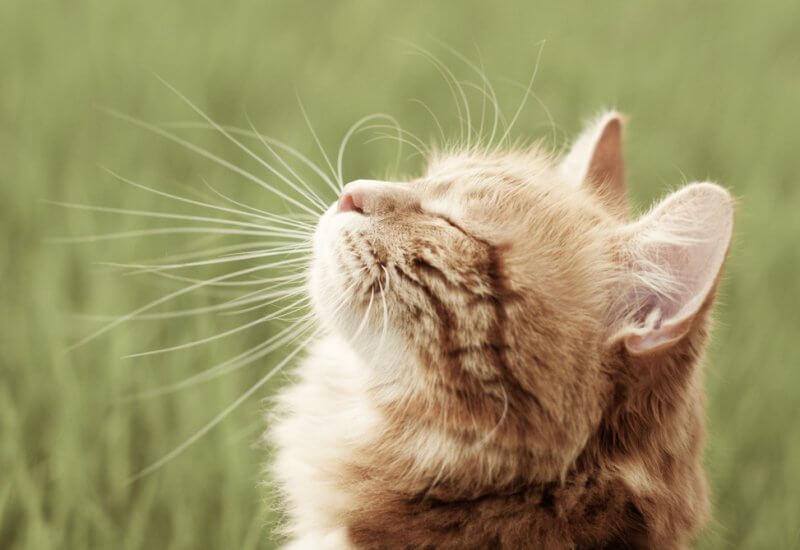 切っちゃダメ! 猫のヒゲの役割とヒゲで分かる心理状態とは
