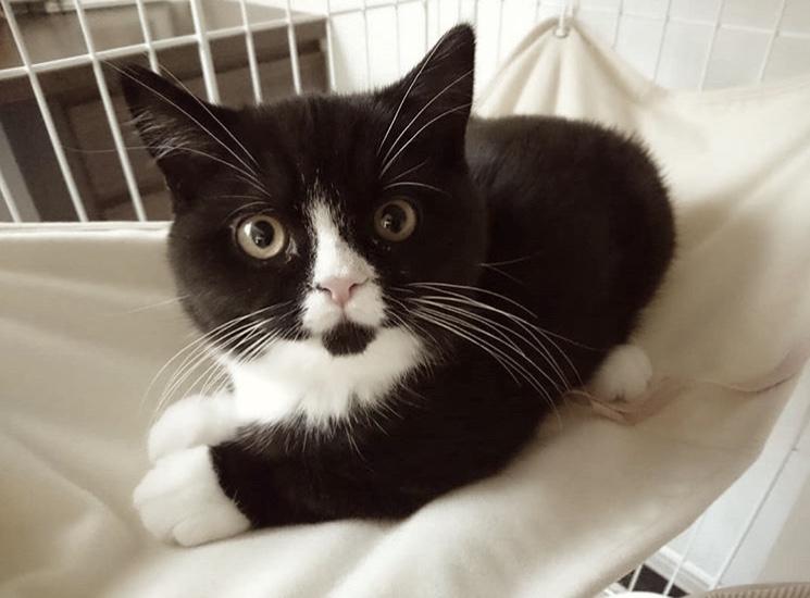 巡り合わせ|ウチの子自慢!愛猫のエピソードご紹介