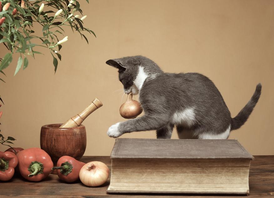 猫にタマネギを食べさせていはいけない理由とは