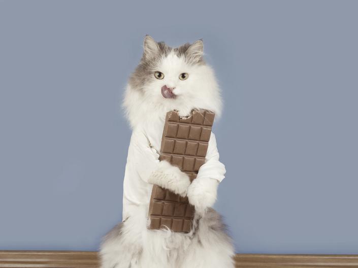 猫にチョコレートを食べさせてはいけない理由とは