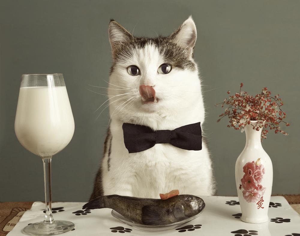 猫に魚介類を与えすぎるのは注意