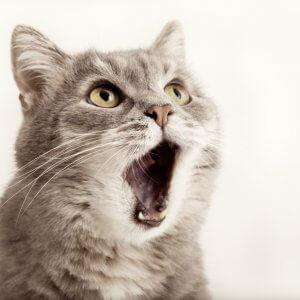 猫のアゴに猫ニキビができた! 原因と症状、治療法とは?