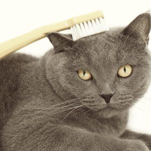 猫の口が臭い!病気のサイン?猫の口臭の原因と予防法