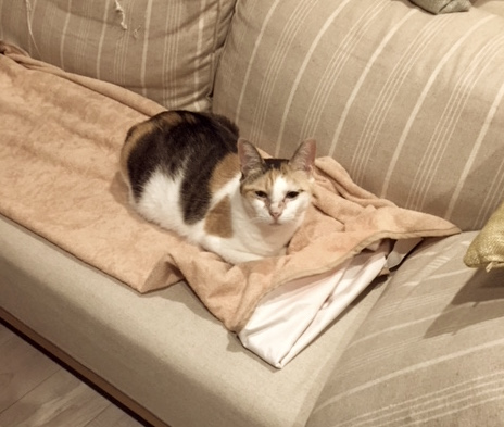 猫 マーキング 防止 えっ、簡単?!猫のマーキング対策にアルミホイルを使う方法とは