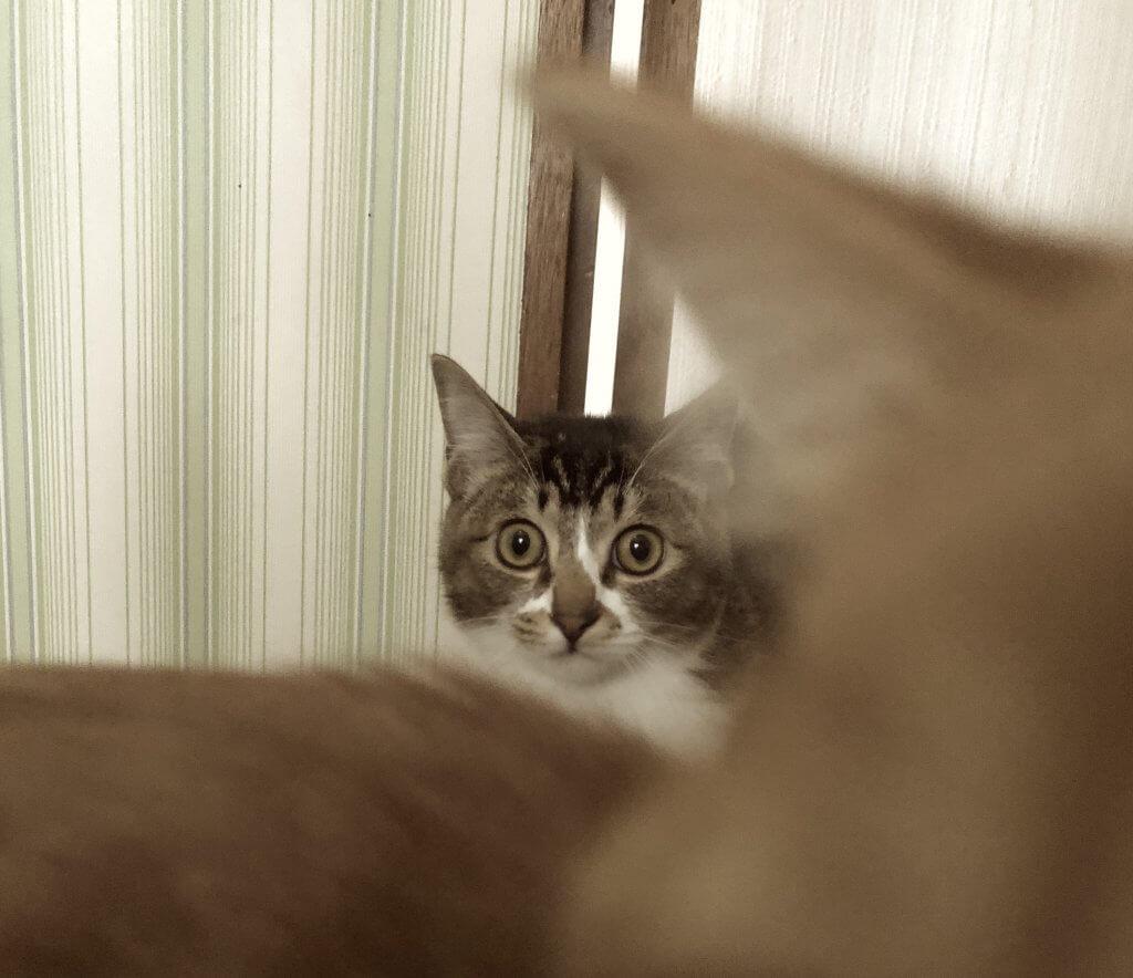 猫が飼い主を舐める 場所によって違う意味とその心理とは