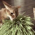 猫がゲロを吐いた!嘔吐の原因と対処法とは?