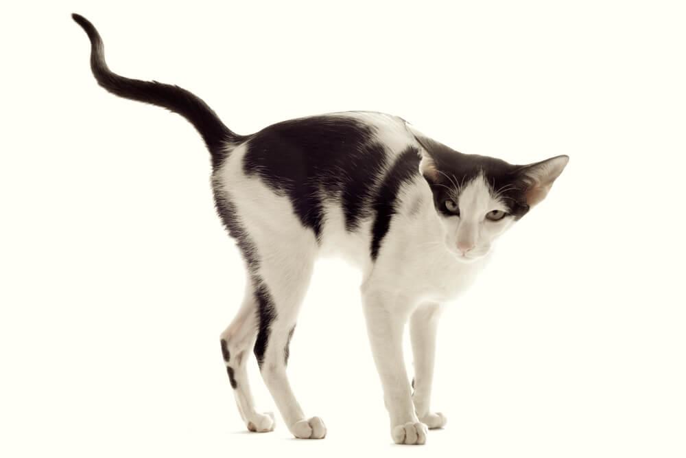 猫のストレス解消法!食事、遊び、癒やしでストレス発散する方法