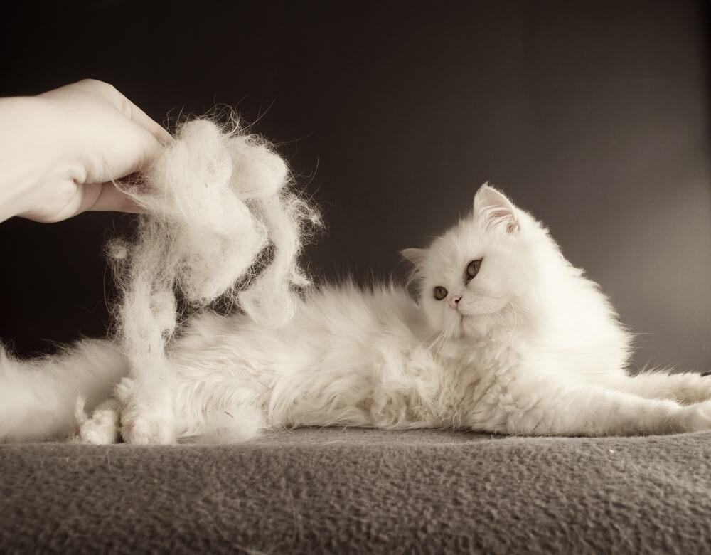 春到来!換毛期の猫の抜け毛対策と正しいブラッシング法とは
