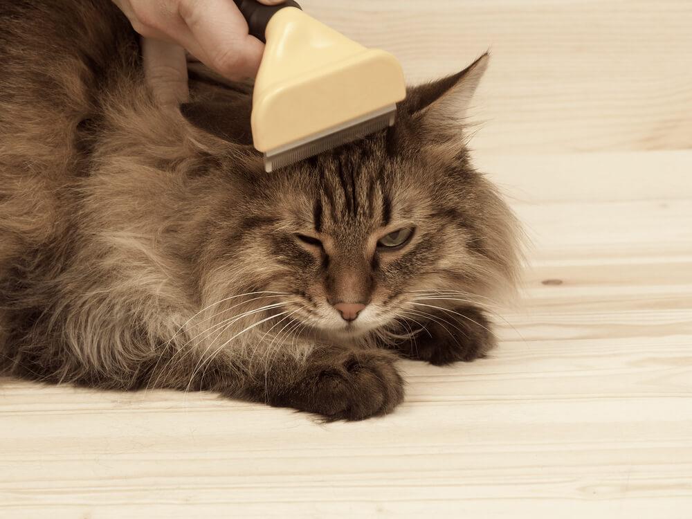 お部屋の場所別に徹底解説!猫の抜け毛のお掃除方法とは