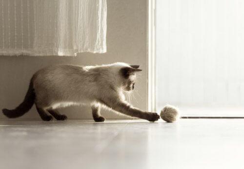 猫の抜け毛が原因!「毛球症(ヘアボール)」の症状と治療法