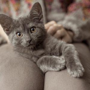 猫が泣いて喜ぶマッサージ方法。部位別テクニックとは