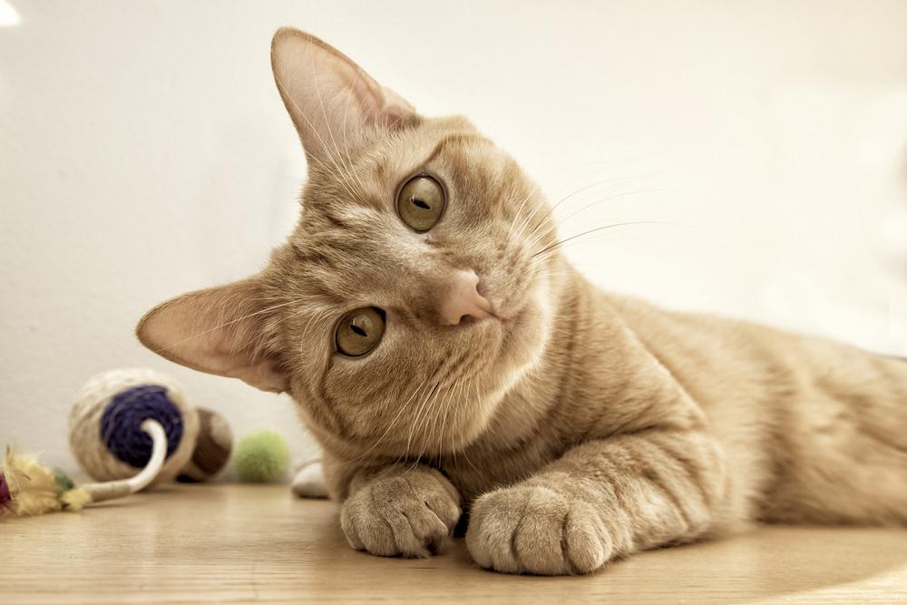 猫の精力剤!?猫にまたたび、意外と知らないその効果と注意点とは?