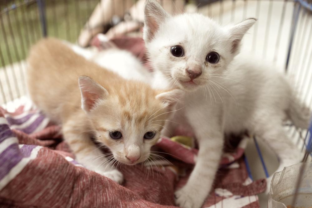 野良猫を飼うときに、まずやらなければいけない5つのこと
