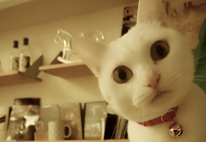 猫首輪ハゲの原因と治療法。愛猫の首周りが発毛停止になってしまったら