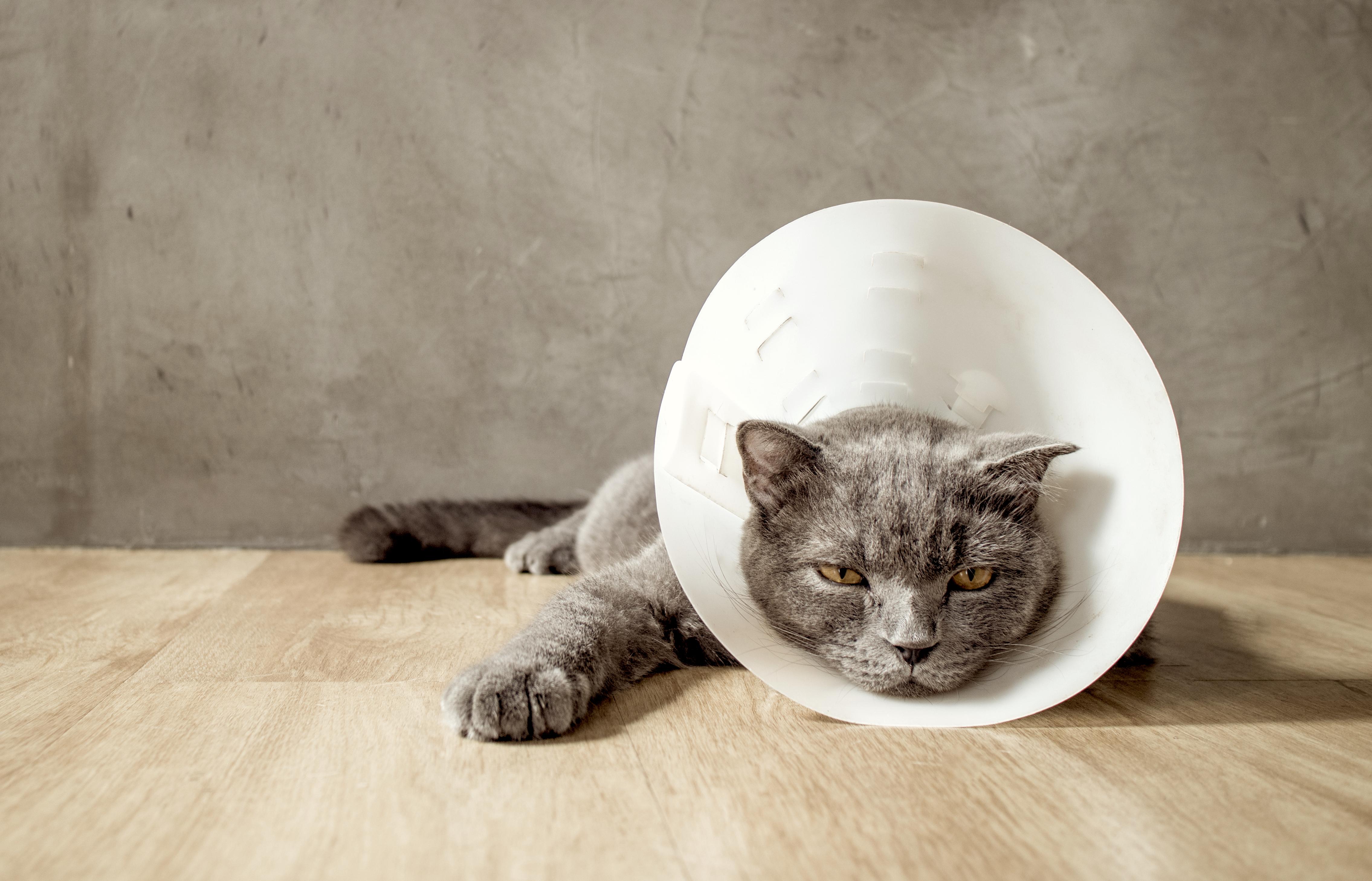 猫ちゃんに多い皮膚病とは?原因と治療法、予防法を知ろう!
