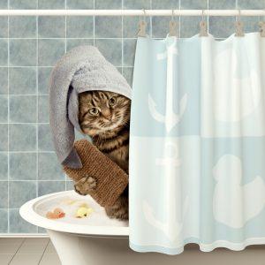 猫用ドライシャンプー