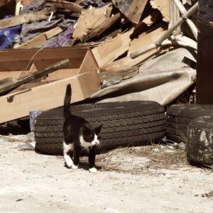 ペット防災|猫の防災対策Vol.2【避難編】もし大地震が起きたときは