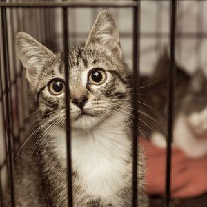 ペット防災|猫の防災対策Vol.3【支援編】被災地の猫ちゃんに私たちができること