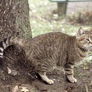 猫のマーキングとやめさせ方。これでダメなら諦める?