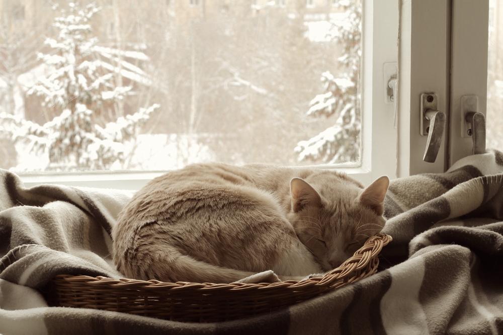 猫の乾燥肌対策!カサカサ肌、フケ、ひび割れの予防とケア方法