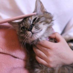 愛猫家が「ねこじゃすり」開発者に聞いた効果と使い方をレポート!おすすめの理由と嫌がるときの対処法とは