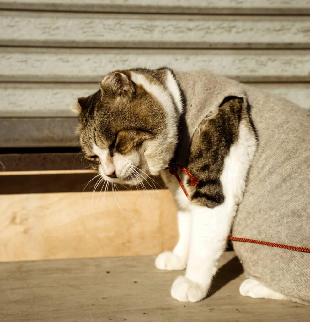猫に服は必要?着せちゃダメ?猫服を着せるデメリットとは?