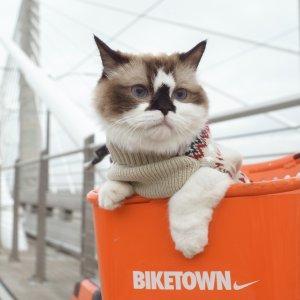 猫に猫服は必要なの?猫に服を着せるメリット・デメリットを詳しく解説!【舐め壊し・掻き壊しに】