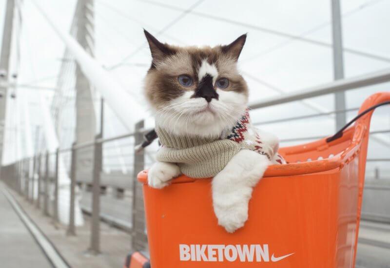 猫に猫服は必要なの?猫に服を着せるメリット・デメリットを詳しく解説!