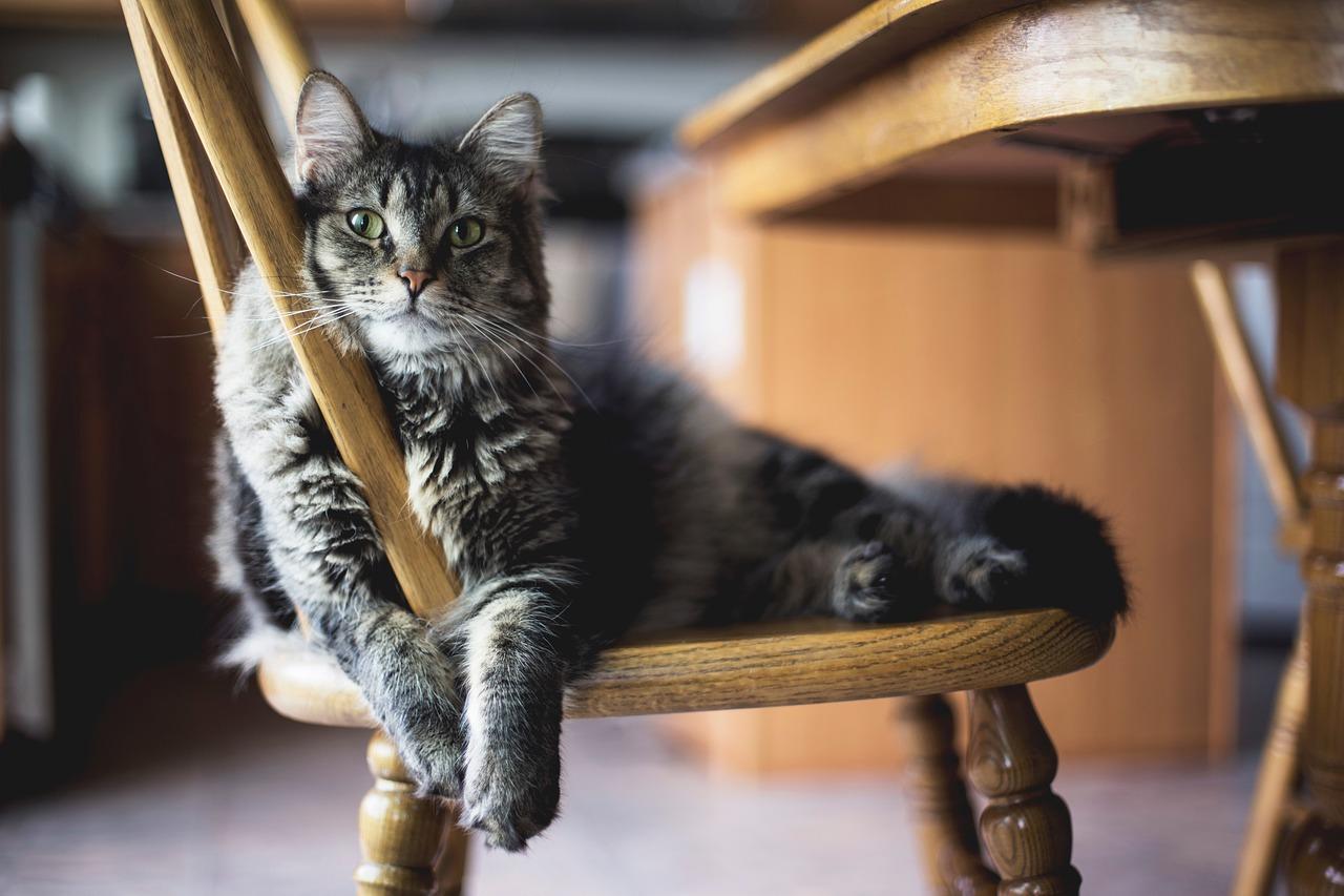 猫が家具を噛む理由は?